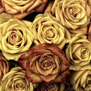 roses_flower_love_214264